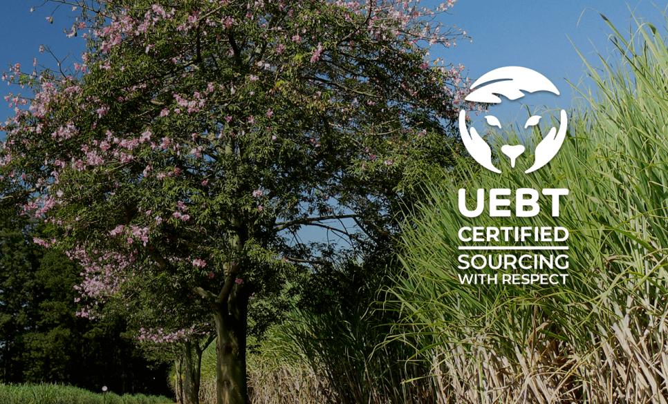 Native: primeira empresa de alimentos certificada pelo Fornecimento Ético da UEBT.